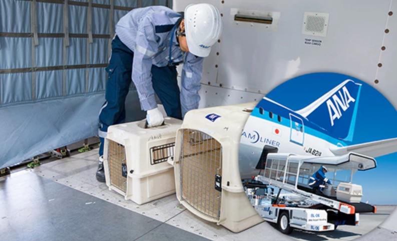 愛犬を飛行機(国内線)で輸送する方法 貨物