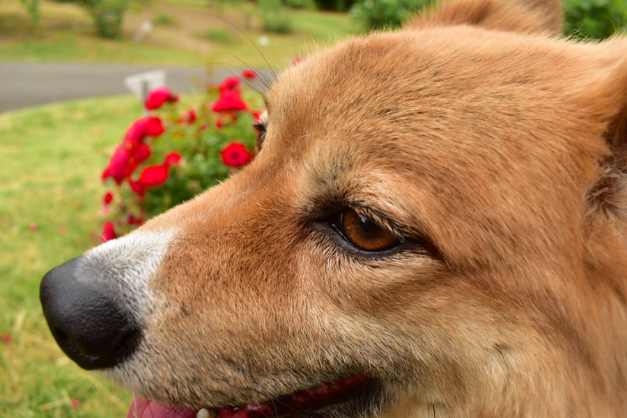 動物愛護週間(9月20日~26日)について考えよう!ドッグパッドが伝えたい動物愛護の