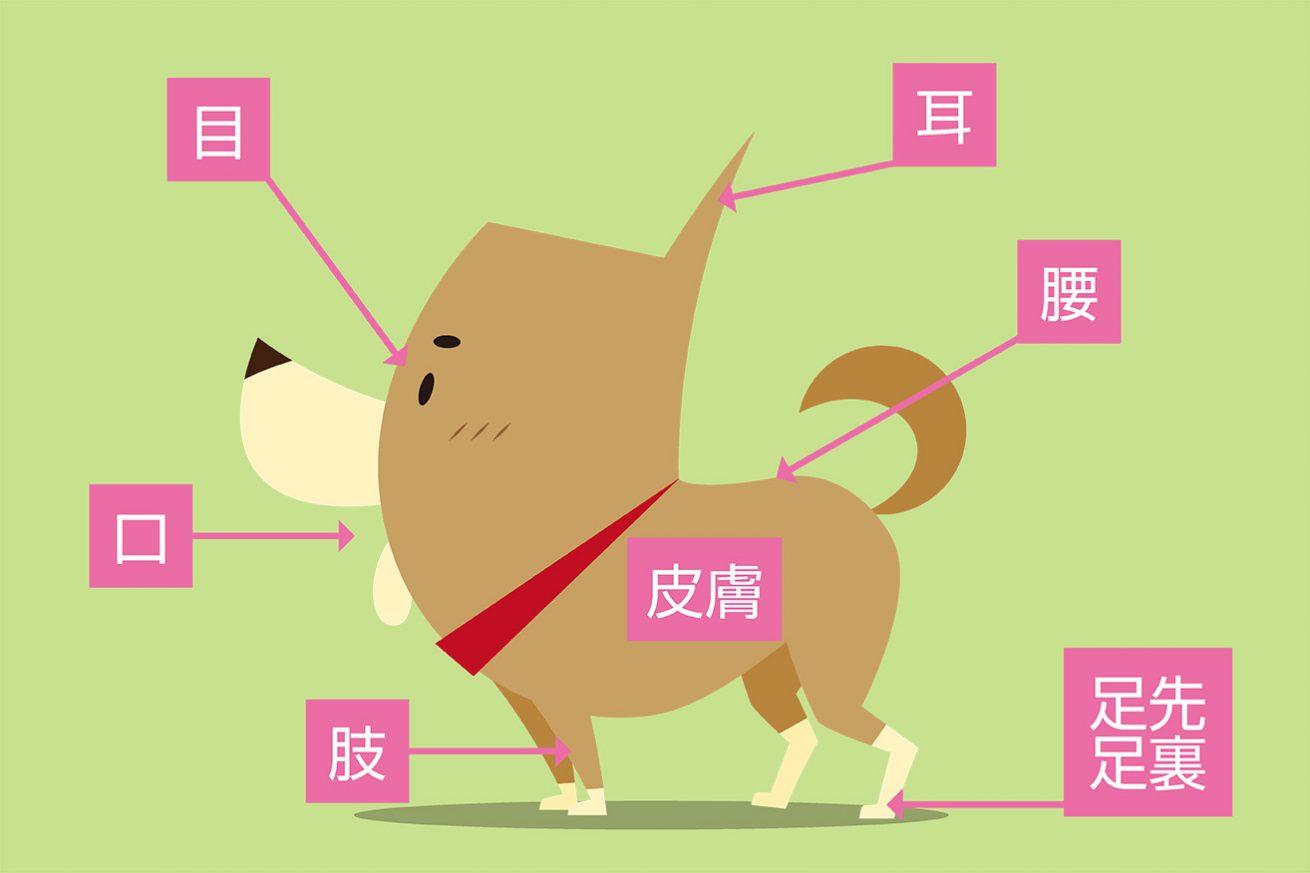 犬の健康管理 体をチェックするポイント ドッグパッド