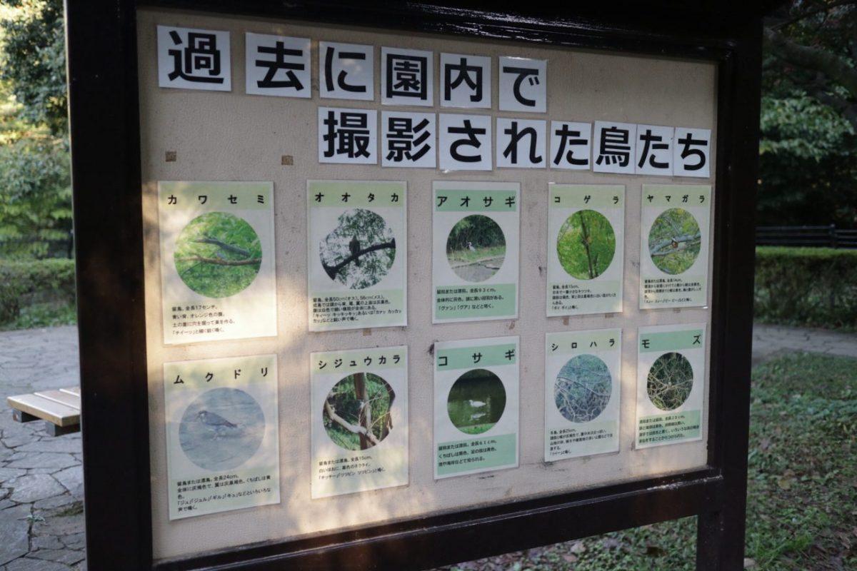 代々木公園 野鳥