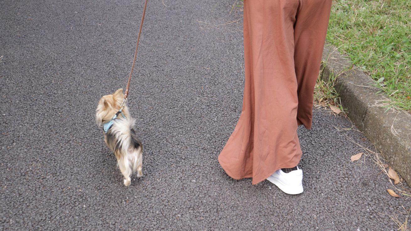 お散歩の基本である「リーダーウォーク」は、リードを持っている飼い主が主導になり犬と散歩をすること