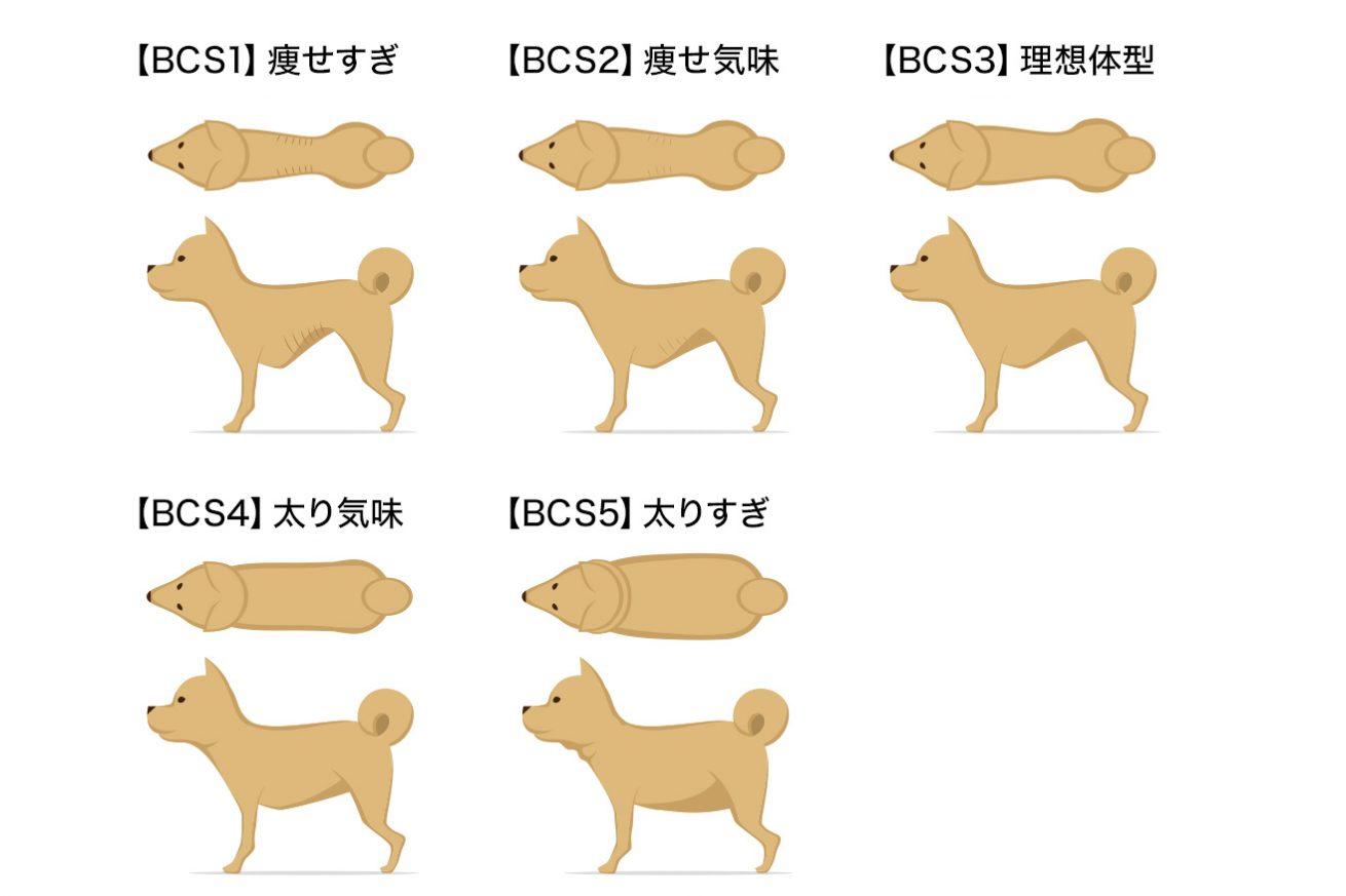 犬の適正体重ボディコンディションスコアによる肥満か痩せすぎかのチェック方法 ドッグパッド