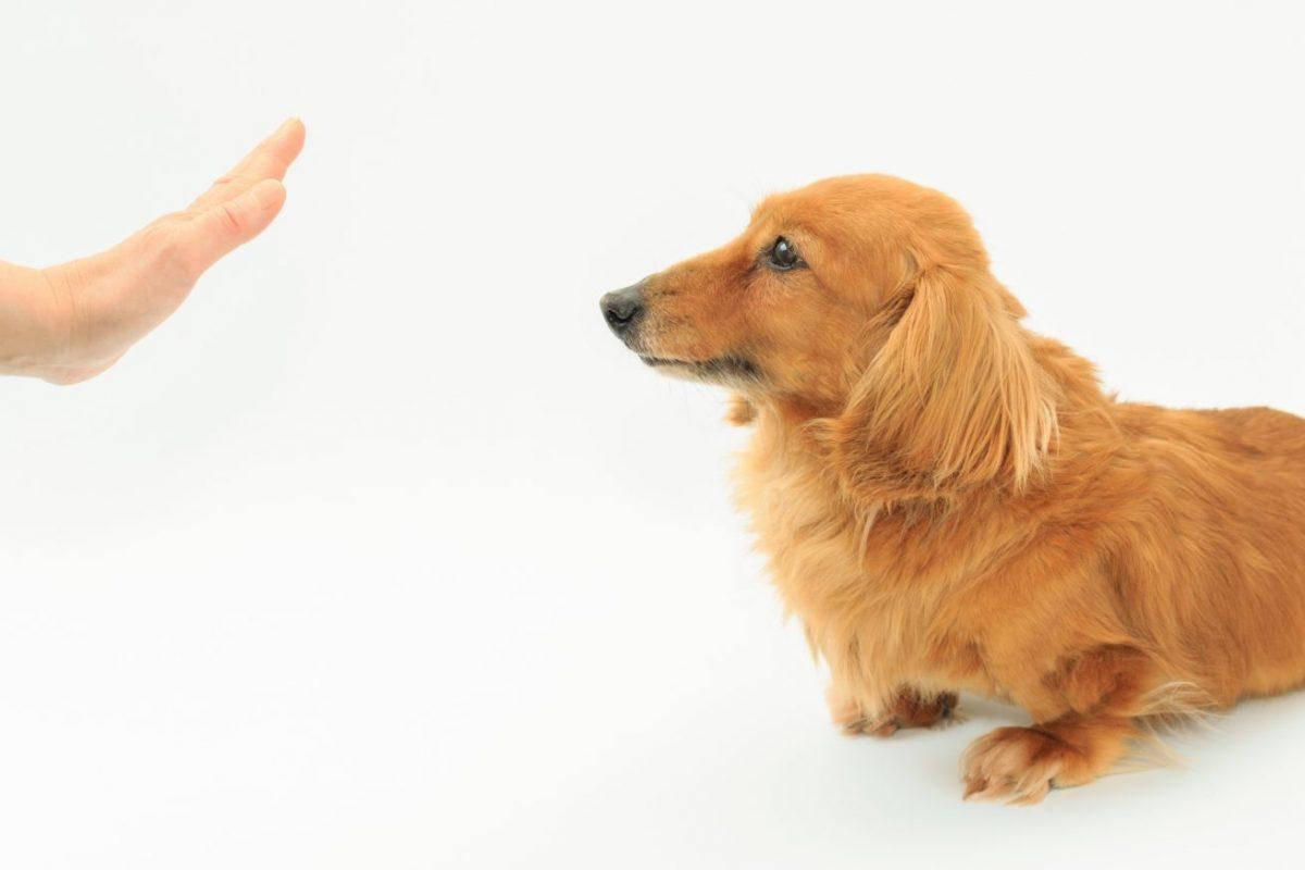 犬の基本のしつけ トイレトレーニング 留守番 お散歩 無駄吠え お悩み
