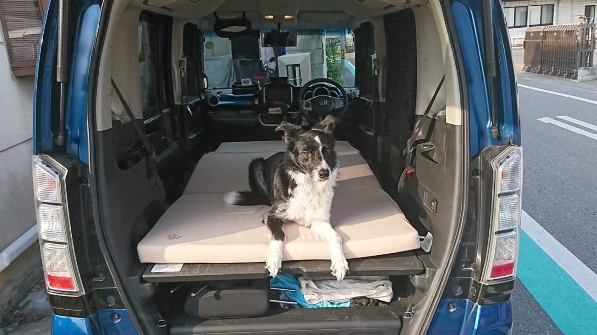 犬と車で出かける際のドライブマナー