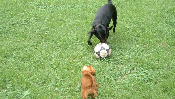 犬の平均寿命って何歳?大型犬と小型犬ではどちらが長生きなの? DOGPAD ドッグパッド