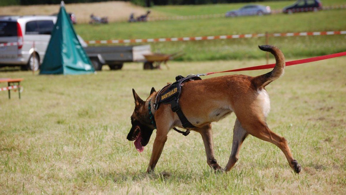 災害の現場で活躍する「災害救助犬」はどんな活動や訓練をするの? DOGPAD ドッグパッド