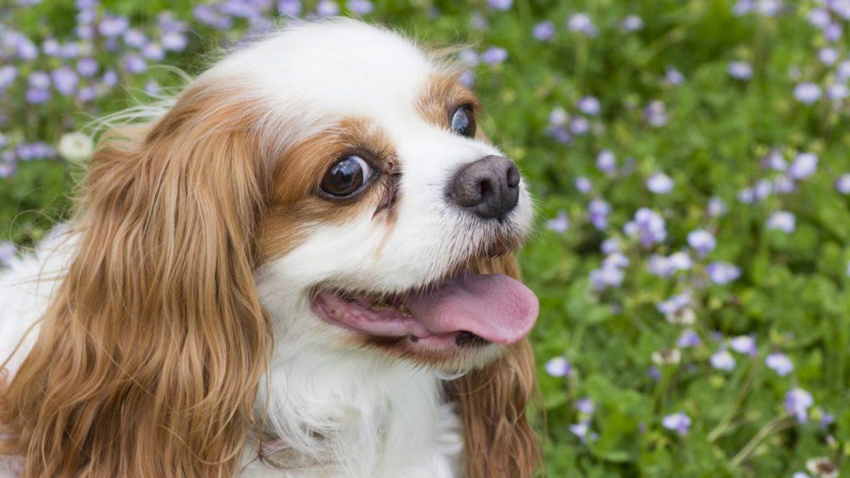 犬の飼い主になるための条件とは