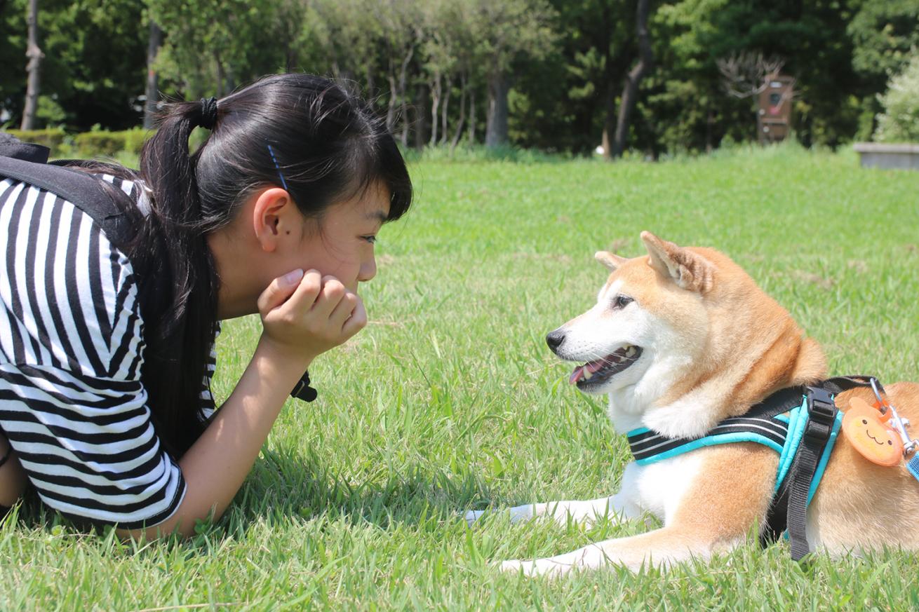 生活スタイルから犬種選びをしよう 犬種選びのポイント