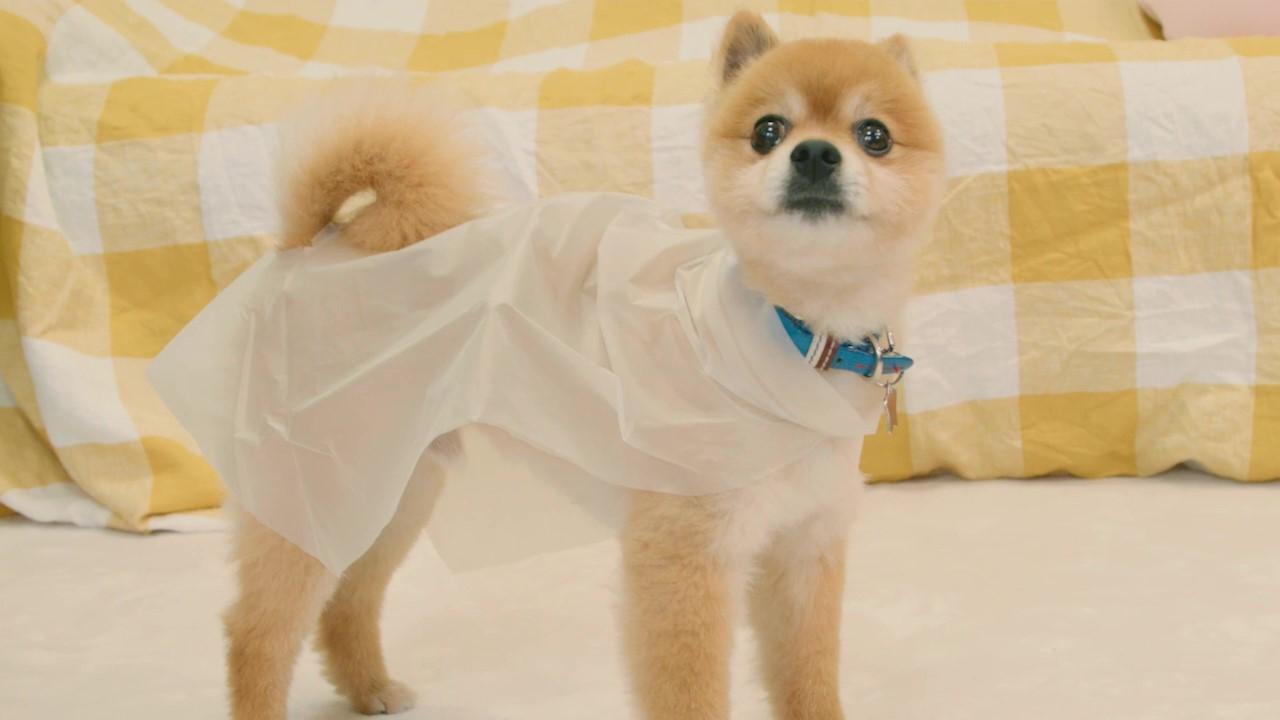 愛犬のためのDIY!犬用レインコートを手作りしてみよう!