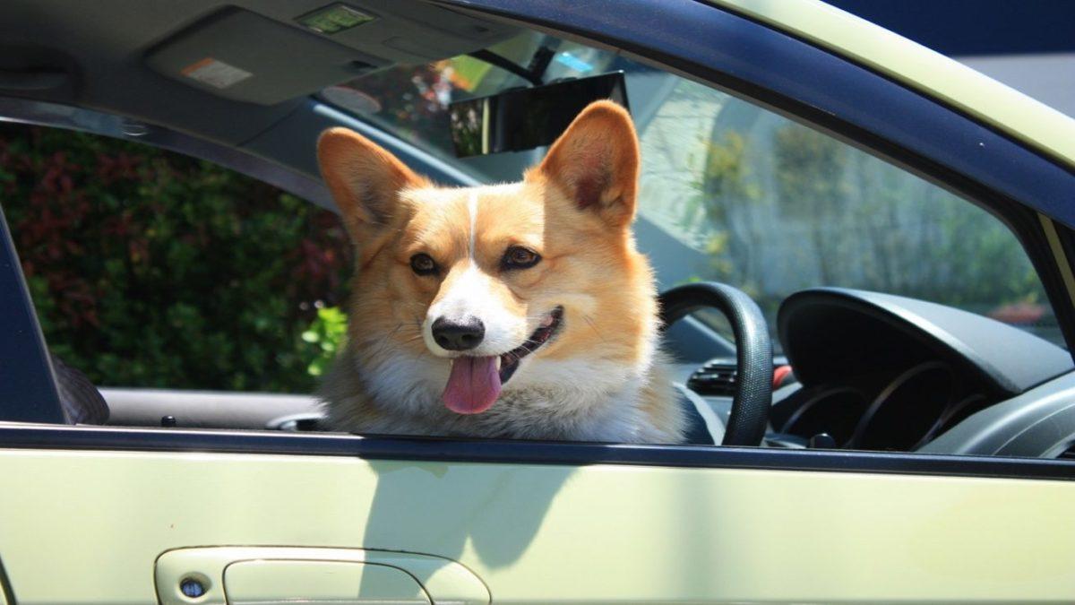 愛犬とのドライブで必要な持ち物 タオル ドライブグッズ コロコロ ウェットティッシュ