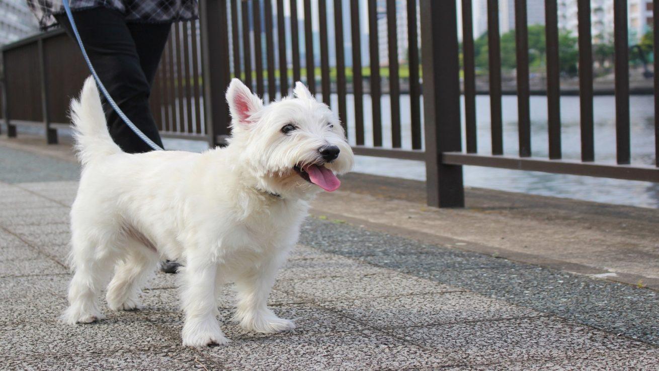 愛犬とのお散歩に必要な持ち物 リード 首輪 お水 うんち袋