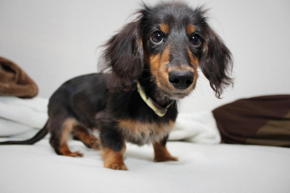愛犬の健康診断 検査内容や頻度について
