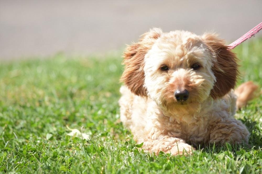 犬の熱中症が起きやすいタイミング