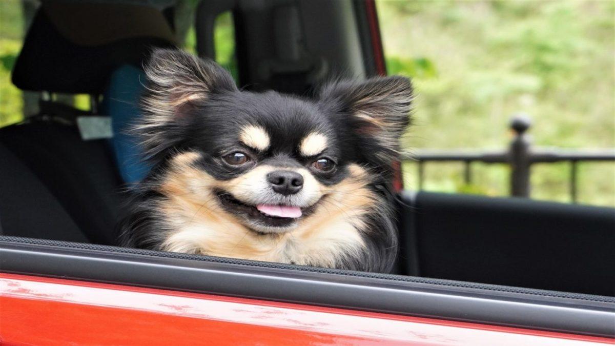 愛犬とのお出かけに必要な持ち物 お散歩 ドライブ ドッグラン ドッグカフェ