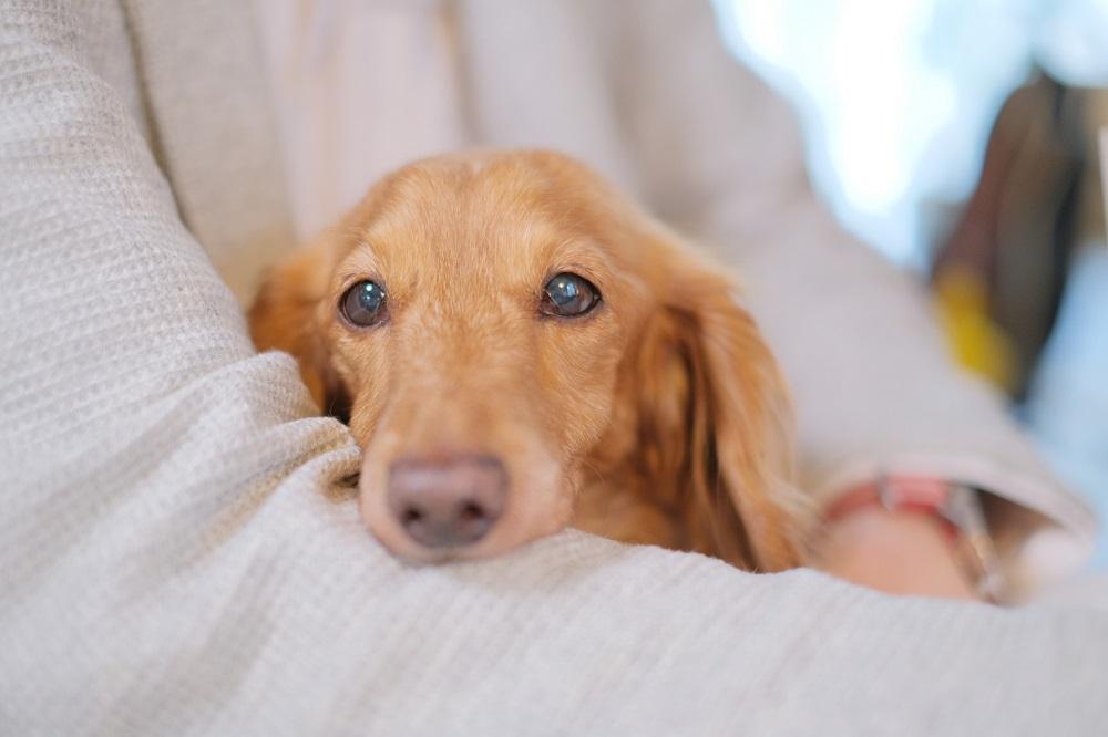 愛犬のしつけで悩んでいる人は多い