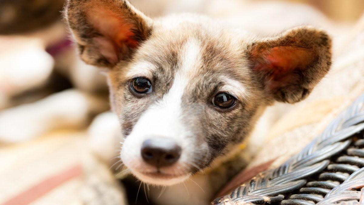 犬が人間の社会で暮らすために