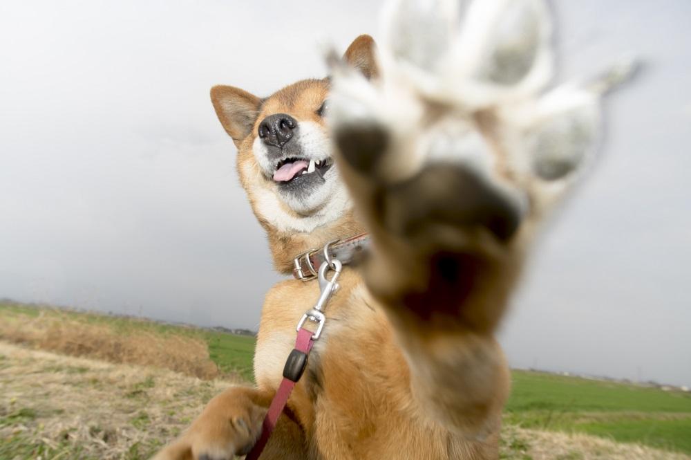 犬のしぐさは愛犬からのメッセージ