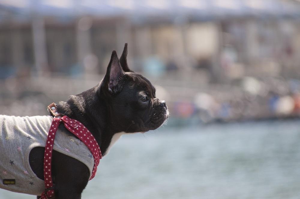 犬のお散歩中のマナー