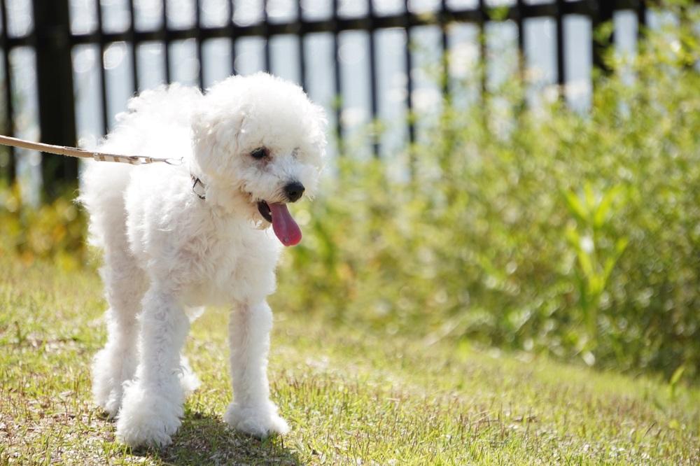 最後に:愛犬のマナーは他人への心づかい