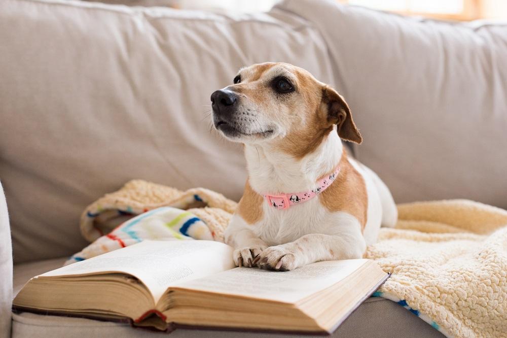 本を読んでいると愛犬が頭や手を乗せてくる