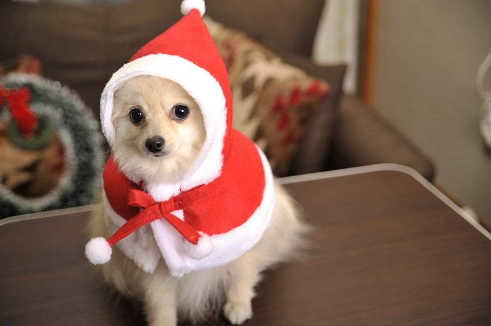 おしゃれなクリスマスプレゼント【洋服、かぶりもの】