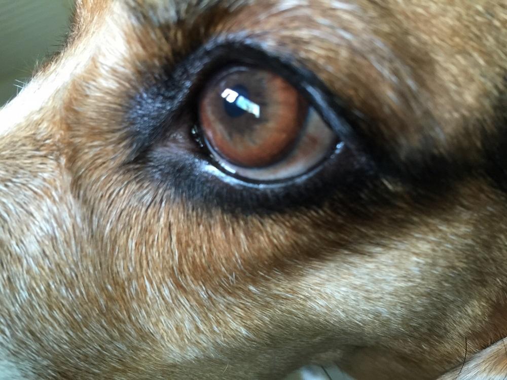 ルテインは目の健康維持に大切な栄養素