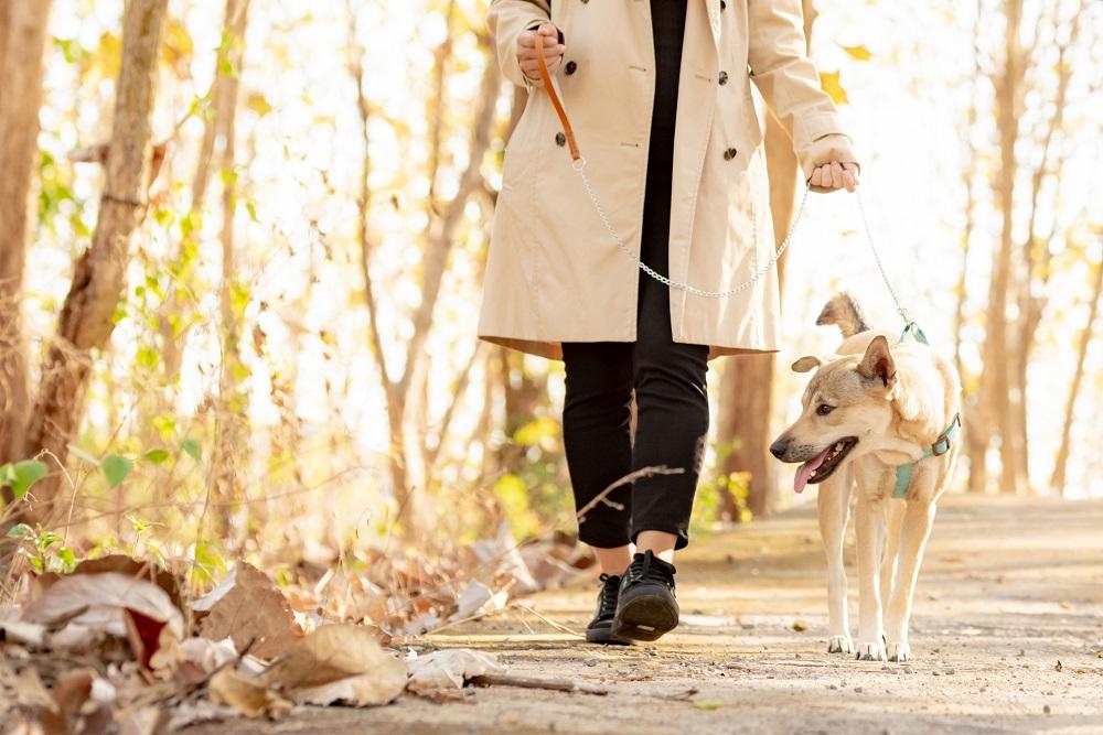 気づかぬうちに減る?冬の散歩と愛犬の運動量