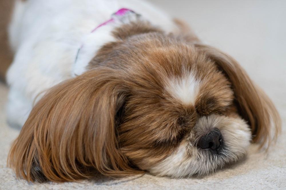 愛犬の肥満が原因で起きること