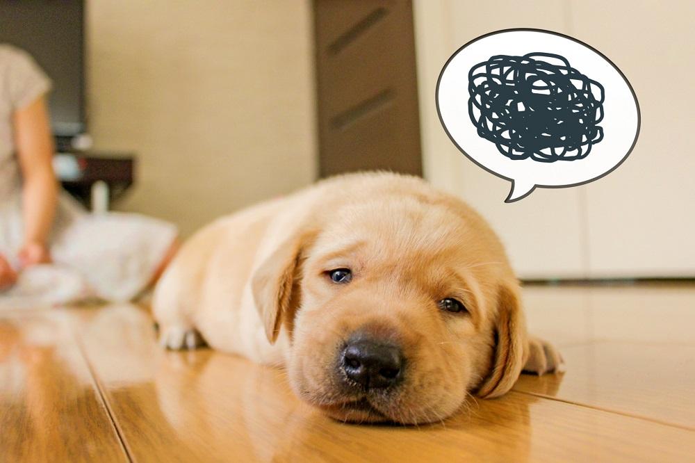 犬の青年期(思春期)の心の変化、これって反抗期?