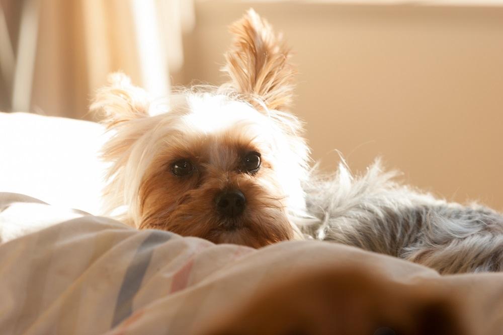どうしたらいい?犬の去勢手術後のお散歩や食事