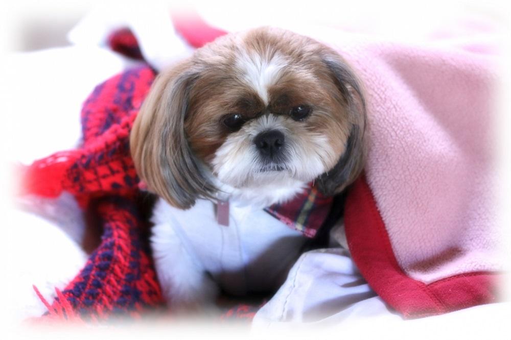 犬は寒さで下痢をするの?