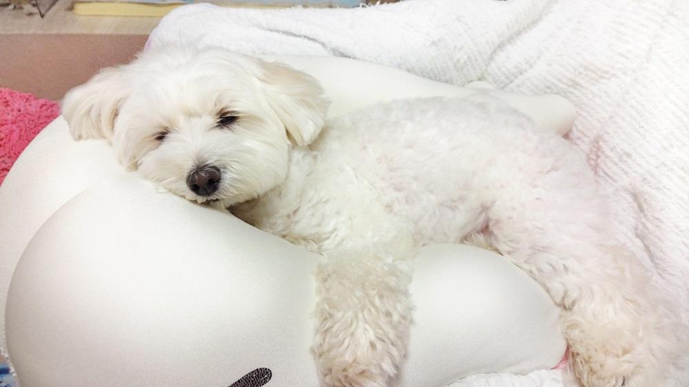 愛犬の腸内環境を整えて下痢を予防しよう!
