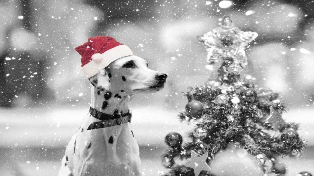 選ぶ楽しみ、あげる楽しみ♪愛犬へのクリスマスプレゼント