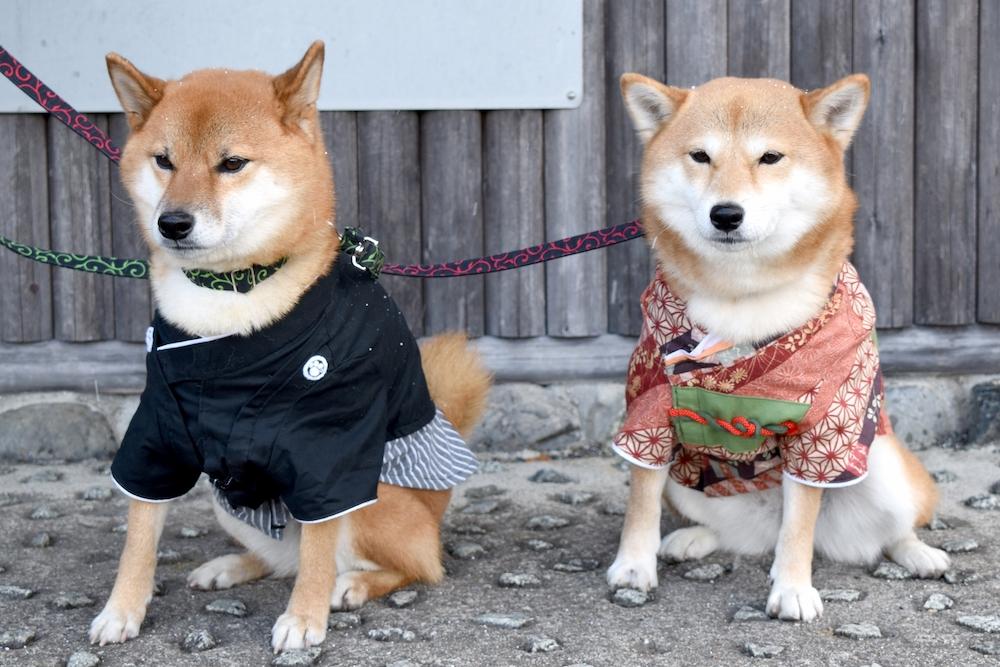 2021年愛犬とのんびり過ごすお正月