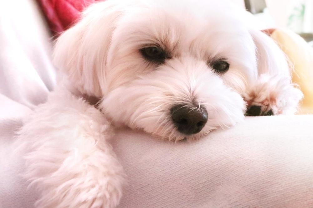 手作りごはんの犬が体調不良を起こした時に考えられること