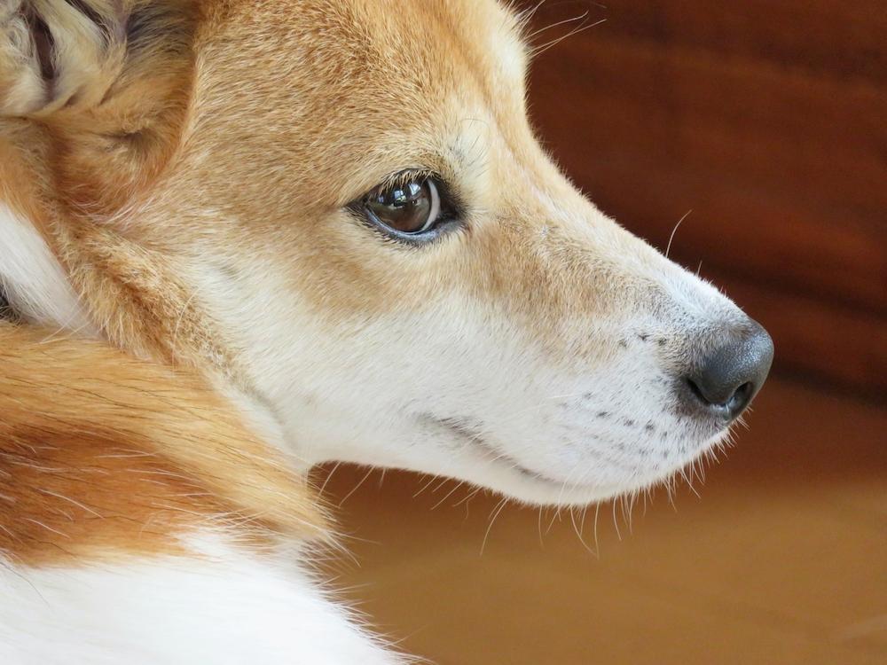 犬がゲップをするのは生理現象で普通のこと
