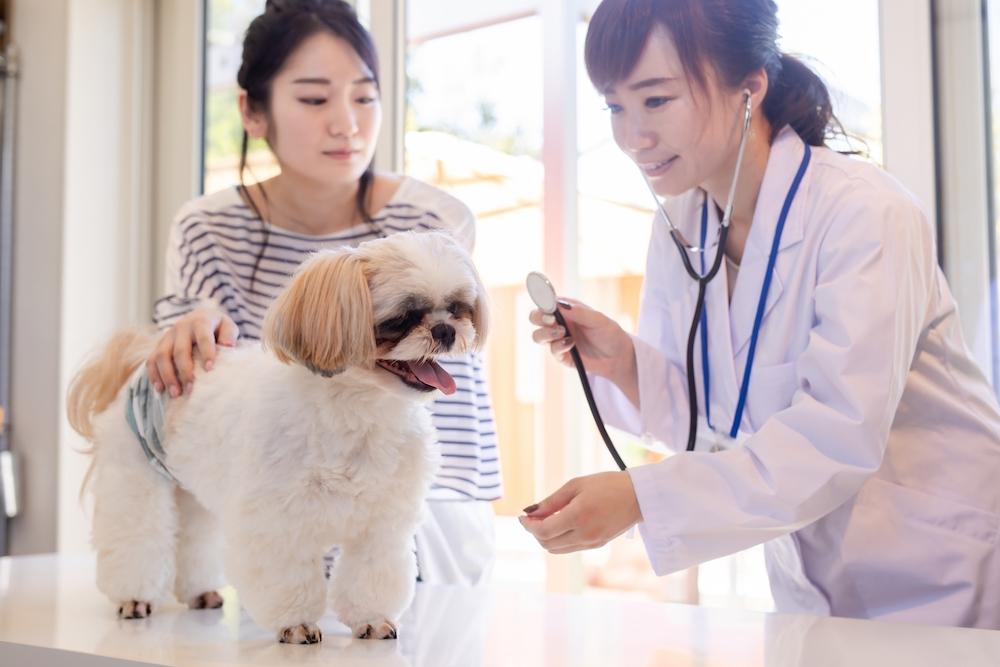 犬のインフルエンザの症状