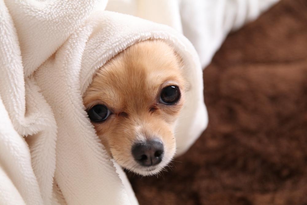 犬インフルエンザの予防方法