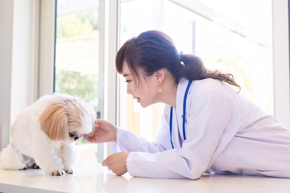 犬の風邪、ケンネルコフの症状