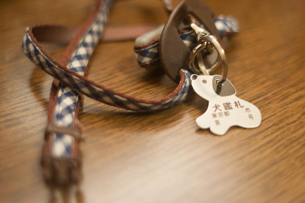 犬の命を守る防災対策①畜犬登録