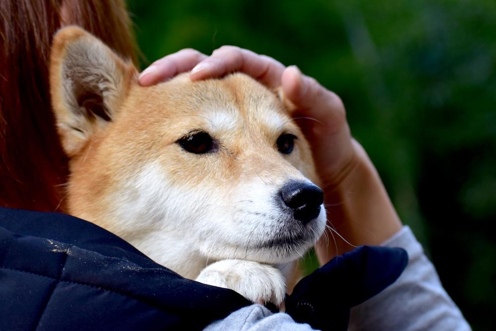 狂犬病を発症するのは犬だけではない