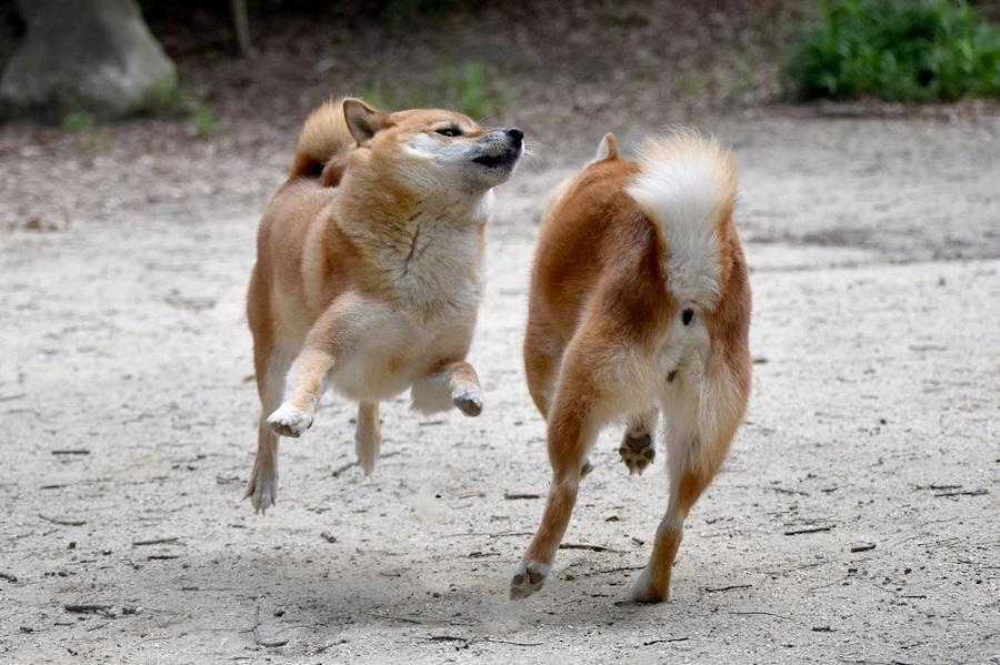 なぜ愛犬同士で喧嘩するの?