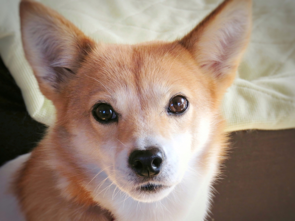 保護犬を迎える方法とそれぞれの注意点