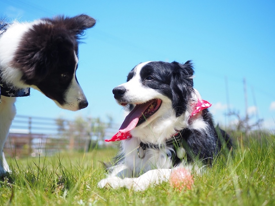 相性は犬種や性別によることも・・・