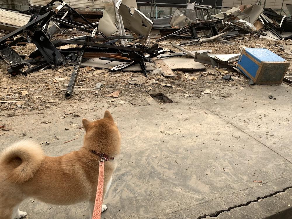 日本は自然災害の多い国、愛犬の命を守るためにできること