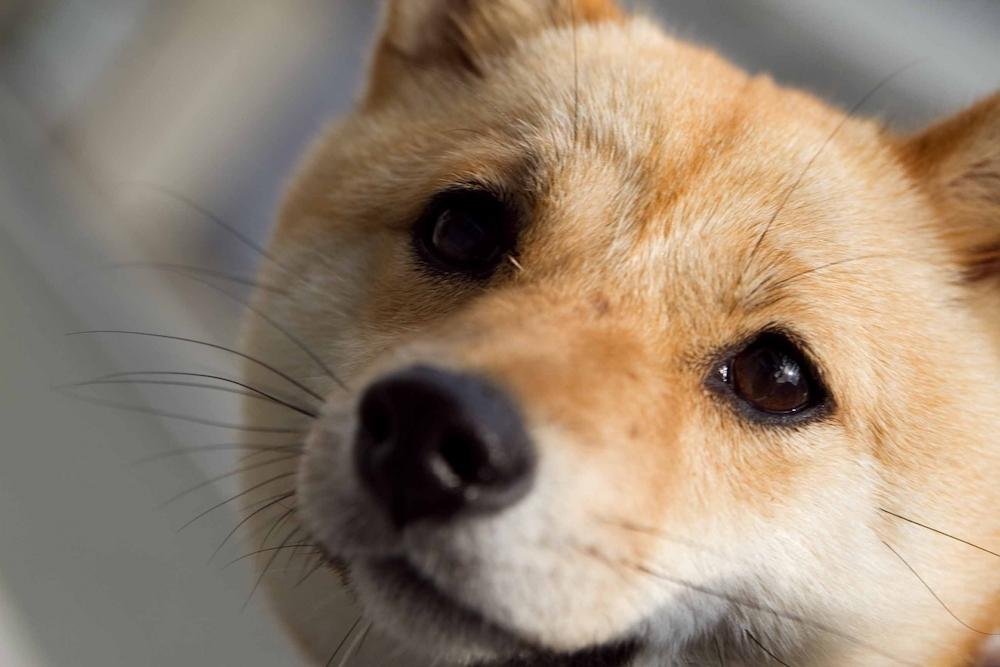 畜犬登録はなぜ必要なのか