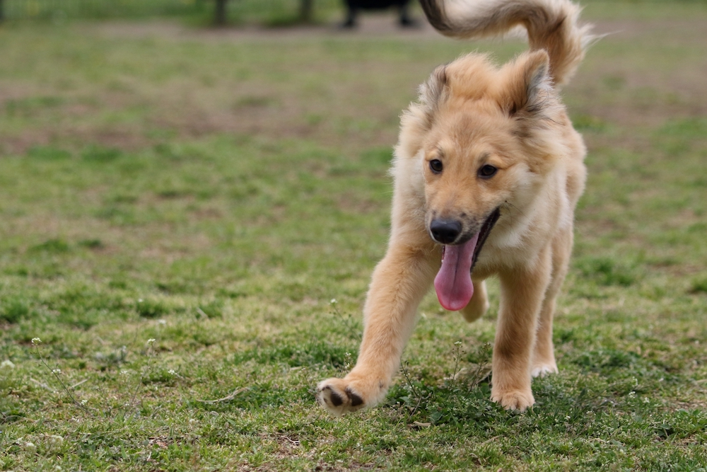 狂犬病の発生状況と日本の現状