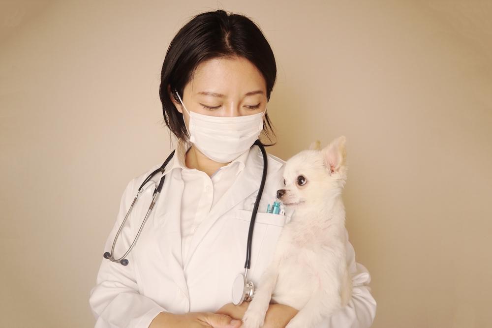 犬の命を守る防災対策③混合ワクチンの接種