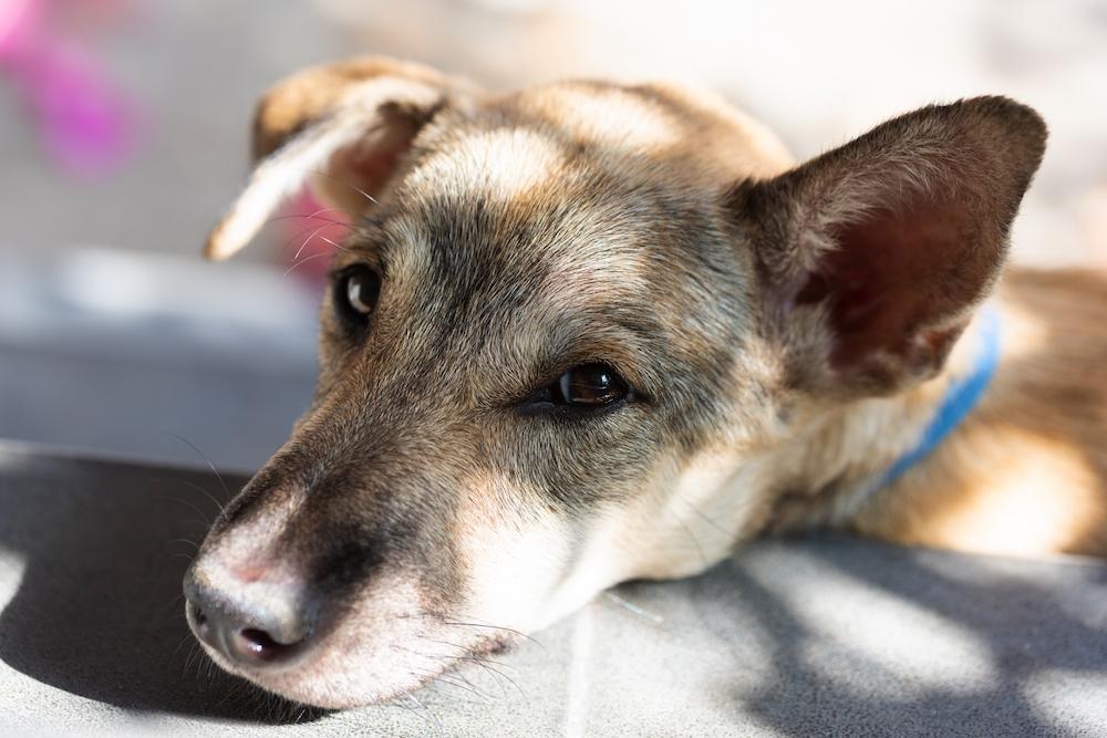 保護犬を迎え入れる際の注意点