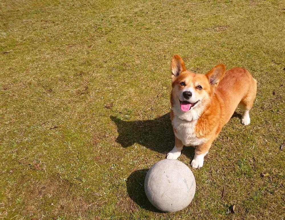 愛犬との休日、どのように過ごしていますか?